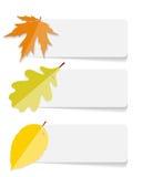 Autumn Leaves Infographic Templates pour des affaires Images libres de droits
