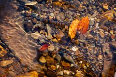 Nature mountains carpathians autumn leaves sunrise forest sunshine leaves yellow blue sky rays heat multicolored palette. Autumn leaves inside the water with royalty free stock images