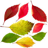 Autumn leaves isolate Royalty Free Stock Image