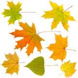 Autumn leaves isolate Stock Photos