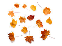 Autumn leaves isolated Stock Photos