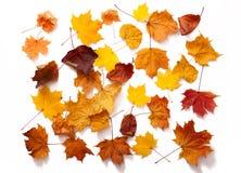 Autumn leaves isolated Stock Photo