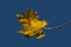 Autumn leaves-1 Stock Images
