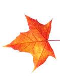 Autumn leaves isolated with copy space Royalty Free Stock Photo