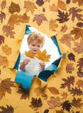 Autumn leaves isolated. Happy kid boy of 3 or 5 years having fun. Logo for your. Autumn leaves background. Rain and. Umbrella november concept. Happy kids royalty free stock photo