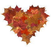 Autumn leaves isolated heart Stock Images