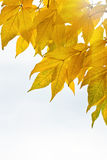 Autumn leaves isolated over whte background. With space for your own text Stock Photos