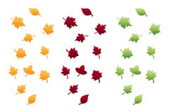 Autumn Leaves Isolated on White. There are three autumn leaves Compositions isolated on white. Various colors Stock Illustration