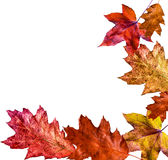 Autumn leaves isolated Royalty Free Stock Images