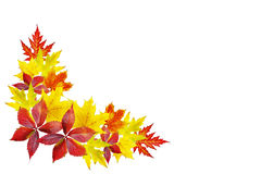 Autumn leaves isolated on white Royalty Free Stock Photo