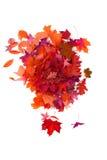 autumn leaves isolated Stock Photos