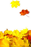 Autumn leaves isolated on white background. Beautiful colorful autumn leaves with copy spcace Royalty Free Stock Photography