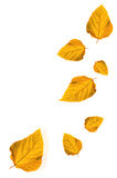 Autumn  leaves isolated on white background Royalty Free Stock Photography