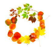 Autumn leaves isolated on a white background Stock Photos