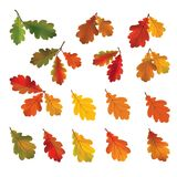Autumn leaves isolated on white background. Fall icon. Nature de. Cor with oak leaf set Stock Photos