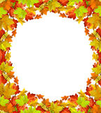 Autumn leaves isolated on white background Stock Photo