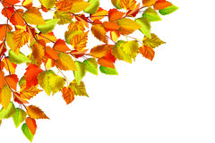 Autumn leaves isolated on white background. Stock Photography