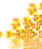 Autumn leaves isolated on white background. Royalty Free Stock Image