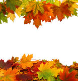 Autumn leaves isolated on white background Royalty Free Stock Photo