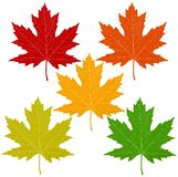 Autumn Leaves Isolated On White vector illustration