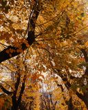 Autumn leaves. Autumn with its colours is the best season fo the year royalty free stock photography
