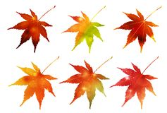 Autumn leaves of Japan material stock photos