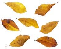 Autumn leaves Stock Photo