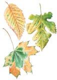 Autumn Leaves jogo Imagens de Stock