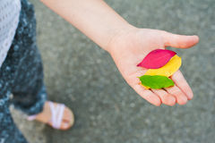 Autumn leaves in kid's hand, top view Royalty Free Stock Photos
