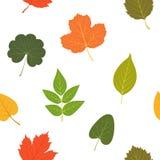 Autumn Leaves Kleurrijk naadloos patroon Vector illustratie Stock Fotografie