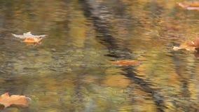 Autumn Leaves 4 Kreek stock videobeelden