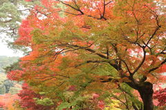 Autumn leaves in Kyoto Royalty Free Stock Photos