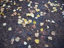 Autumn leaves laid on the ground Royalty Free Stock Photography