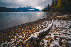 Autumn leaves on a lake coast covered by snow. Royalty Free Stock Photography