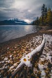 Autumn leaves on a lake coast covered by snow. Stock Image