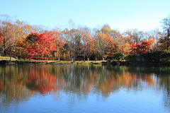 Autumn leaves by lake in Kiyosato highland royalty free stock photo