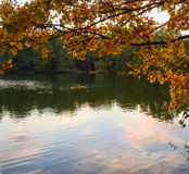 Autumn leaves at lake Teplice stock photos