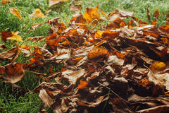 Autumn leaves on the lawn Stock Photography