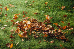 Autumn leaves on the lawn Stock Photo