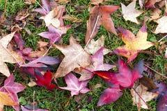 Autumn Leaves Laying en hierba Foto de archivo