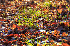 Autumn leaves laying in the grass Stock Photos