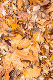 Autumn leaves leaf background wallpaper Stock Photography