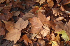Autumn leaves. Autumn leaf fall stock illustration