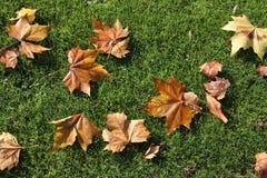 Autumn leaves. Autumn leaf fall vector illustration