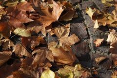 Autumn leaves. Autumn leaf fall royalty free illustration