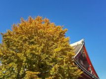 Autumn leaves. Autumn leave turn to yellow at Senjoji Temple Japan Royalty Free Stock Image