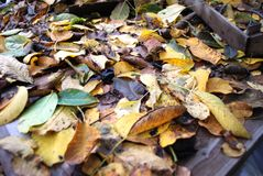Autumn leaves lie on the ground. Autumn leaves in september forest. Background Royalty Free Stock Image