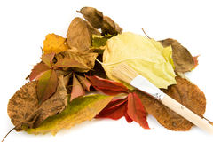 Autumn leaves lie isolated on white background. Royalty Free Stock Photos