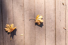 Autumn leaves lie Royalty Free Stock Photo