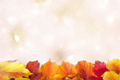 Autumn leaves on a light Stock Image